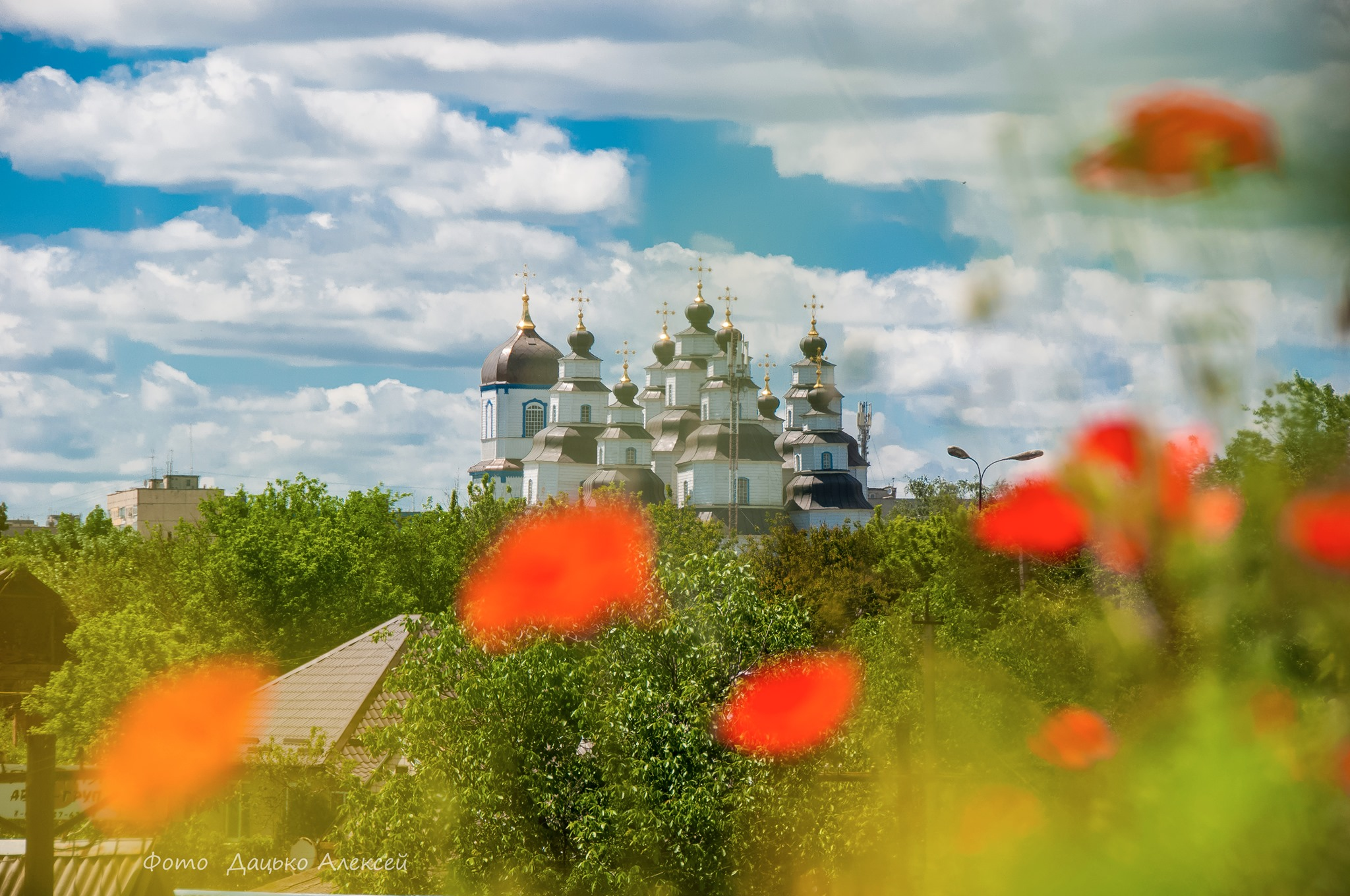 Вид на Свято-Троицкий собор сквозь цветущие маки, май 2021